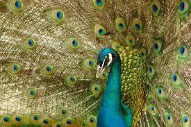 bird idioms explained clever bird phrases