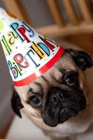 Happy Birthday Pug Meme - happy birthday sister pug meme google search pugs pinterest