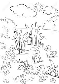 coloring pages five little cute ducklings swim on the lake and