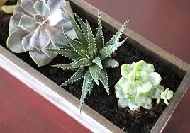 how to make succulent planter boxes images about succulent plants
