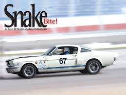 year shelby mustang 40 years of shelby mustang performance snake bite mustang