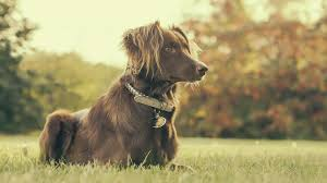picture of dog in backyard free stock photo