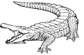crocodile coloring pages 10636