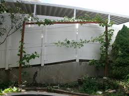farmer u0027s market and grape trellising urbancompostsystems