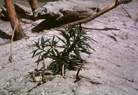 usda native plants forest service nature