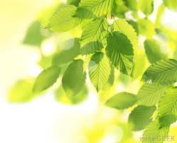 Plants That Don T Need Natural Light by Why Do Trees In Rainy Places Have Big Leaves With Pictures