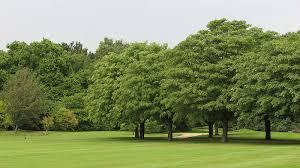 Different Types Of Japanese Gardens - trees used around buckingham palace garden plants nursery