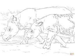 sumatran rhinos coloring page free printable coloring pages