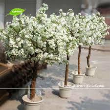 indoor blossom tree solidaria garden