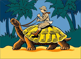 10 best tortoise illustration images on turtles