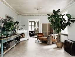 Small Indoor Trees by Large Indoor Trees That Make A Bold Statement Apartment Therapy