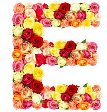 e roses flower alphabet isolated on white stock photo colourbox