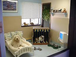 pet room ideas dog bedroom unique and stylish pet room ideas decoration channel