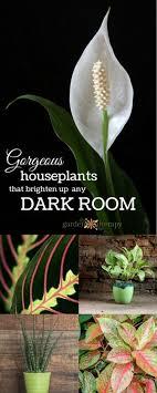 plants that grow in dark rooms gorgeous indoor plants that love the dark
