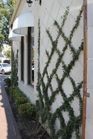 The Trellis And The Vine Pergola Ivy Trellis Glorious Ivy Trellis Salon Grand Floridian