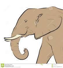 an elephant head isolated stock photography image 141212