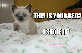 the kitten stole the bed funny kitten meme