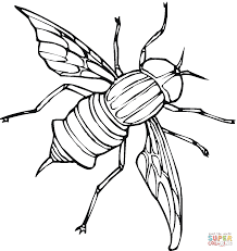 download fly coloring page ziho coloring