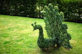 Horse Topiary Topiary Animals Agrumi New Forest Bespoke Topiary