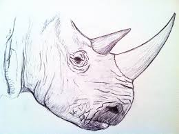 rhino head pen sketch by danahopkins on deviantart