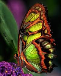 163 best butterflies images on beautiful butterflies