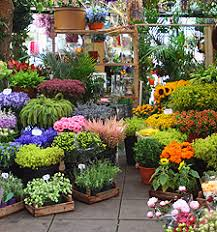 flowers gardening design ideas at homepros