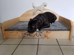 repulsif chien pour canapé les 25 meilleures idées de la catégorie canapé chien sur