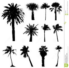 vector palm trees silhouettes isolated on white background palms