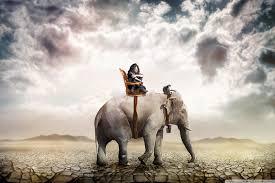 apple wallpaper elephant elephant ride 4k hd desktop wallpaper for 4k ultra hd tv wide