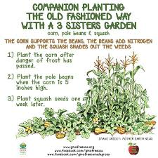 best 25 companion planting ideas on pinterest insect repellent