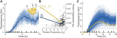 what population reveals about individual cell identity single