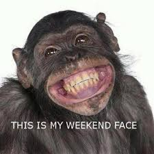 Funny Monkey Meme - funny faces happiness www facebook com drdenadentistencinitas so
