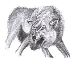 drawn wolf angry pencil and in color drawn wolf angry