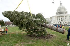 christmas tree capitol christmas tree architect of the capitol united states