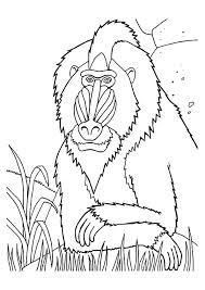 mandrills monkey grass coloring animal free monkey