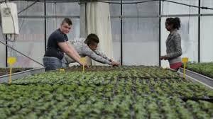 l apprentissage agricole dans les hauts de version longue vincent apprenti viticulteur à crézancy webtv hauts de