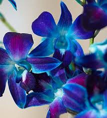 Blue Orchid Flower Ocean Breeze Orchids 1800flowers Com 140953