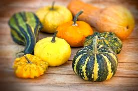 fall gourds and squashes what they are and how to use them zing