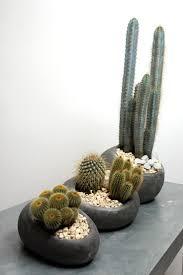 1029 best cactus u0026 suculentas images on pinterest cactus flower