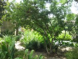 arboretum tree named a big tree chion lakewood east