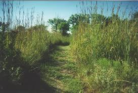 tallgrass prairie national preserve wikipedia