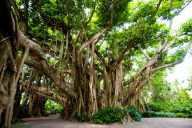 9 trees that grow in india and all you need to about them