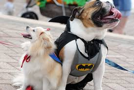 dress your dog for halloween costume contests across tampa bay