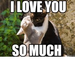Meme Love - 20 very sweet and funny i love you this much memes sayingimages com