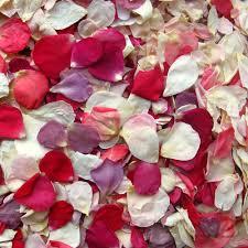 real petals pre mixed rainbow small petals real flower petal