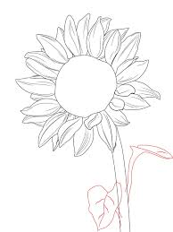 how to draw a sunflower sunflowers drawings and doodles