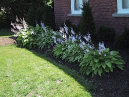 Shady Backyard Ideas by Hostas Small Bush Many Different Kinds Flowers Once A Year