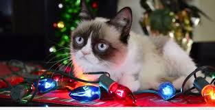 19 Awesome Grumpy Cat Christmas - best funny grumpy cat christmas wishes and sayings 2015