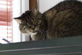 cat running into glass door could feral cats solve d c u0027s rat problem wamu