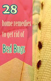 28 effective home remedies to get rid of bed bugs
